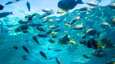 Experience the Great Barrier Reef without getting wet
